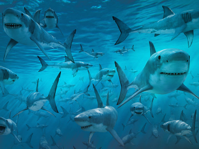 Sharks kill 5 people on average each year