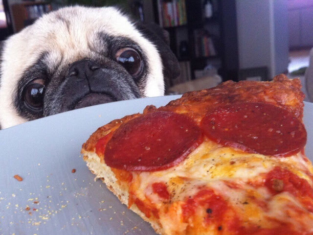 Can I Give Pepperoni To My Dog