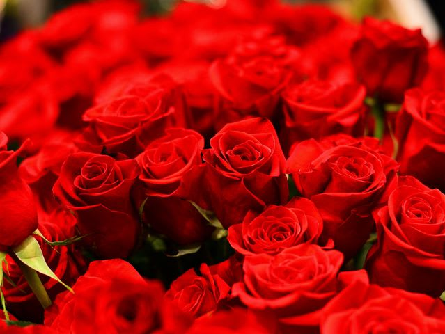 Flowers are actually the most popular Valentine's Day gift. Americans send more than 220 million roses on Valentine's Day each year.