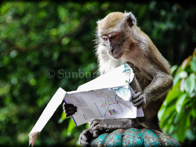 This highly literate monkey is in ...