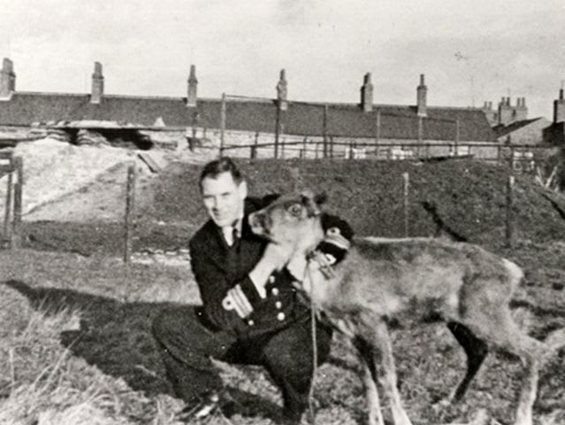 Nope. Nothing true about this one, but the Russians did give the British navy one fully grown reindeer named Pollyanna.