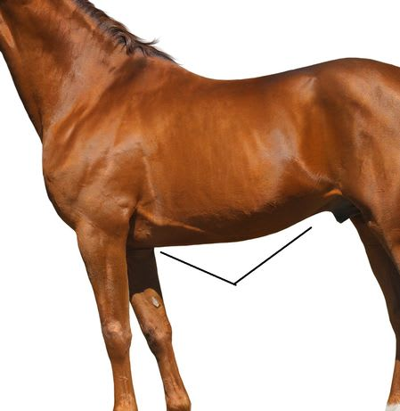 Quiz can you identify these parts of the horse ihearthorses congratulations ccuart Images