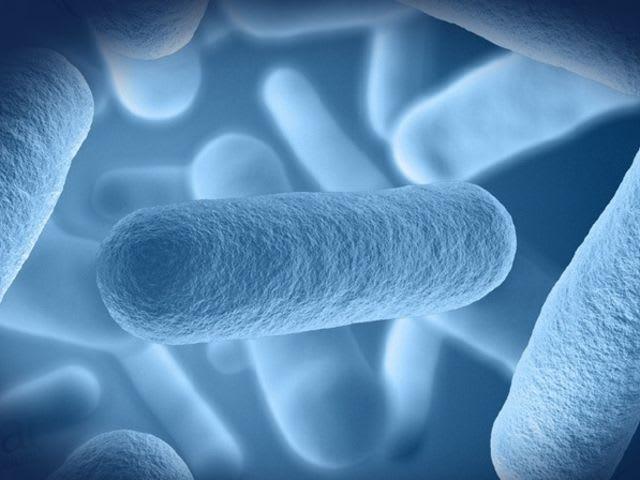 Mi a probiotikum szó jelentése?