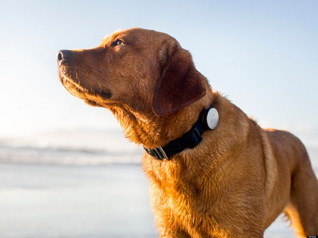"Fill in the blank: ""A dog's collar is usually worn around ____ neck."""