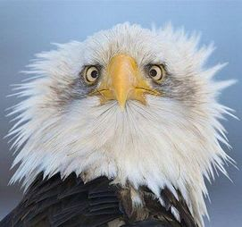 Scared Eagle: You are majestic and fearsome, but you're worried that you'll never be successful.