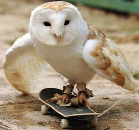 Owl on a skateboard: You never do what people expect you to do. You're a dangerous predator who can do sweet tricks on your board.