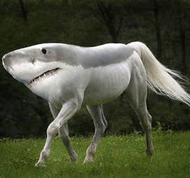 Shark Horse: You don't really know what you are or where you belong, but you'll figure it out.