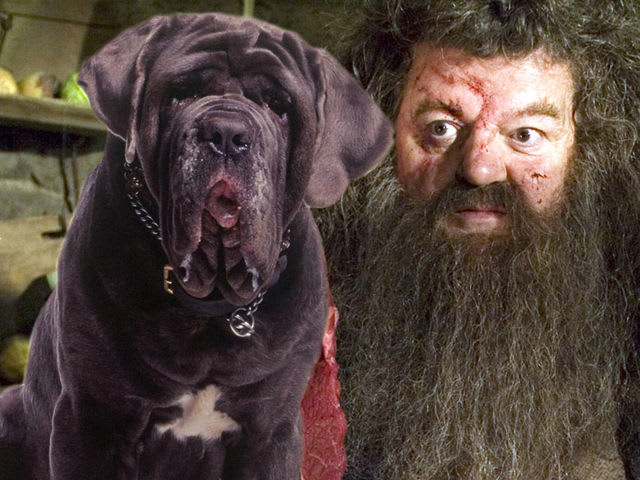 Hagrid S Dog Fluffy