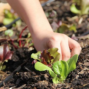 Gardening with your green thumb