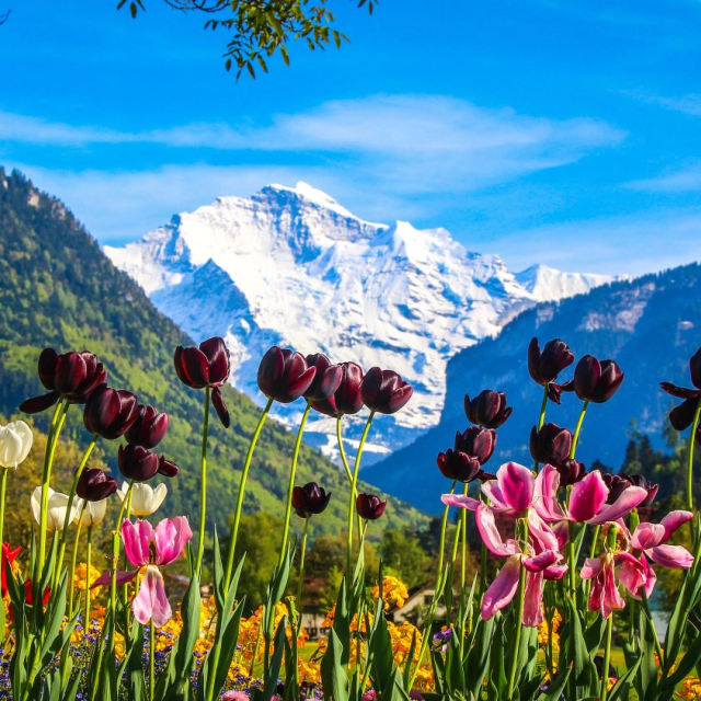 Hiking with your family in the Swiss Alps