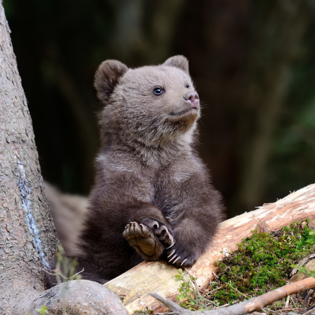 One special little cub :)