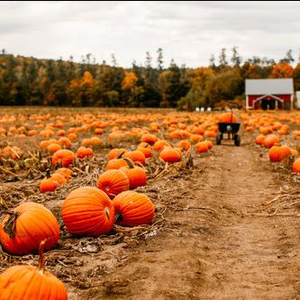 Visiting Pumpkin Patches