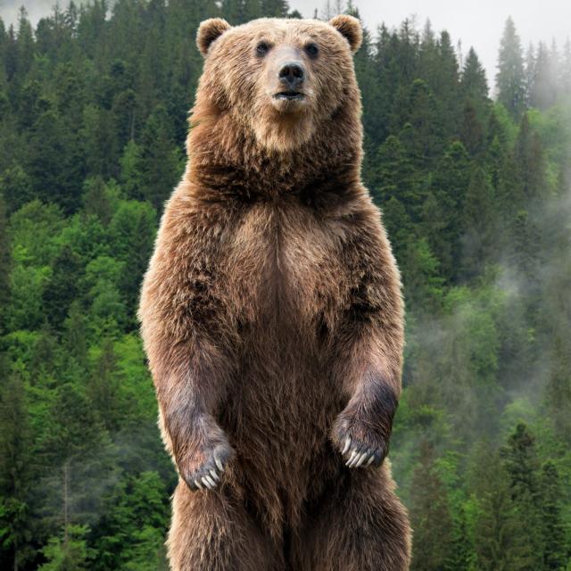 Sturdy Bear