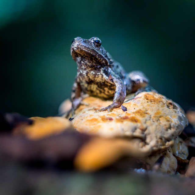 A toad. Classic, yet subtly-brutal move.