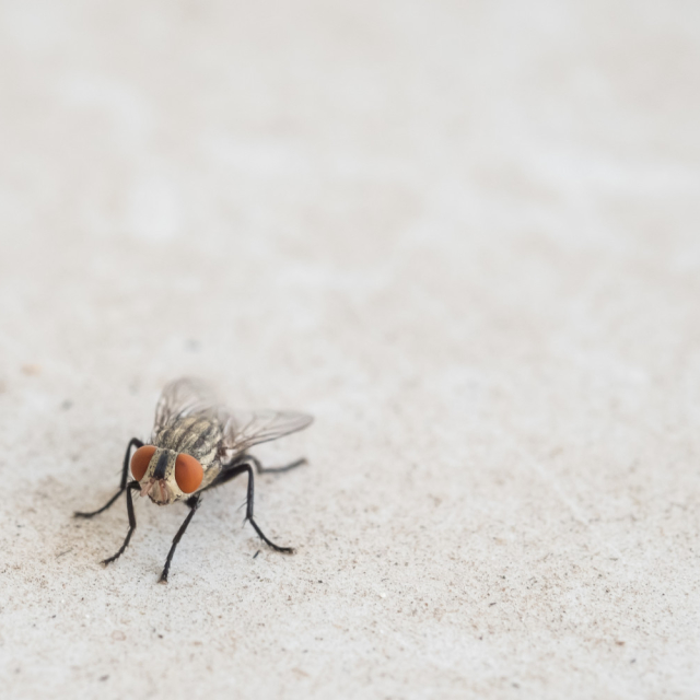 A fly. Meaningless and insignificant.