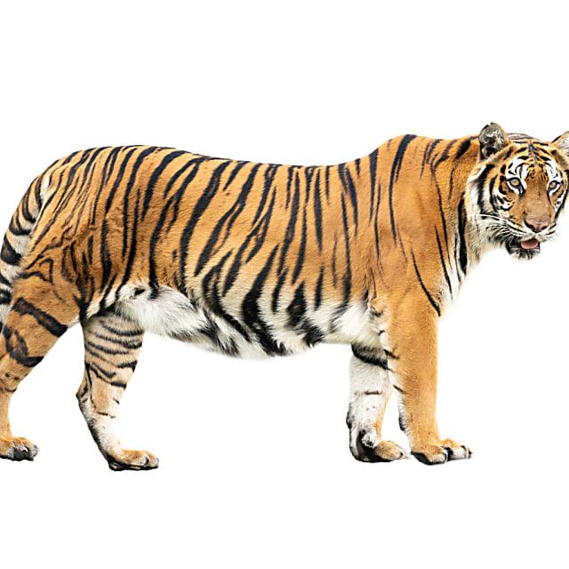 Tiger King Quiz Are You More Joe Exotic Or Carole Baskin
