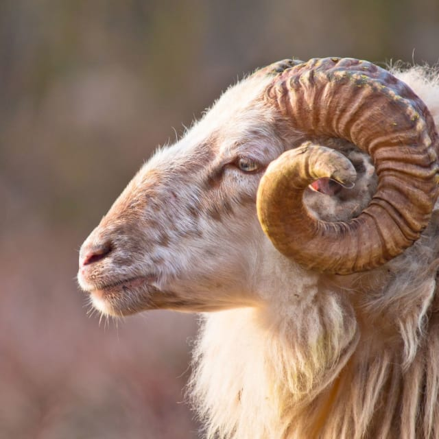 21 March- 19 April (Aries)