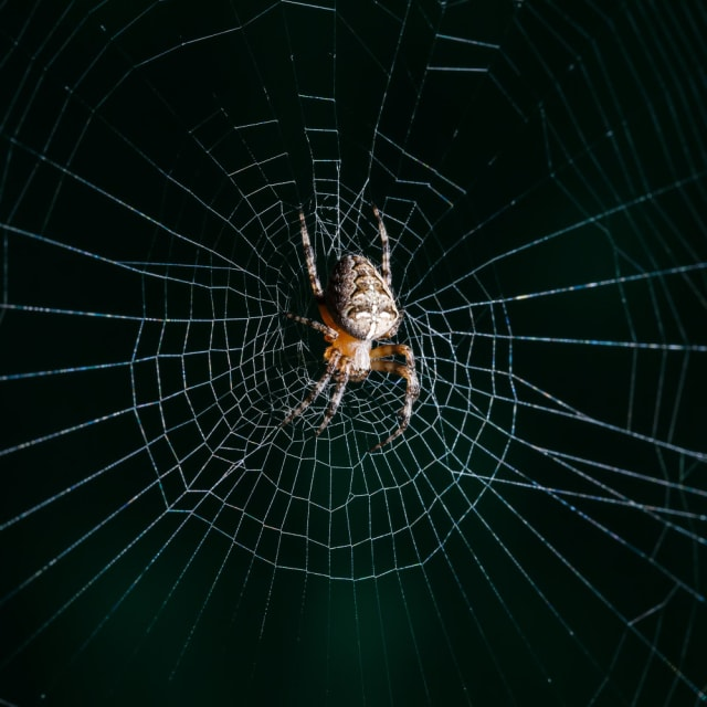 Spiders and creepy crawlers