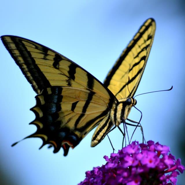A Social Butterfly