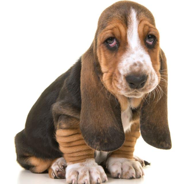 This dog!