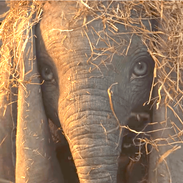 Nope. Just here for the cute elephants.