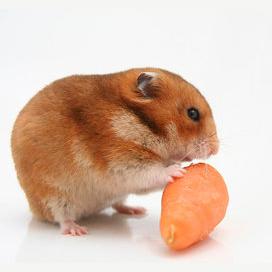 Tiny carrots