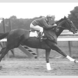 Man O War (Famous Racing Horse)