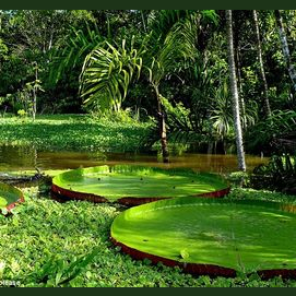 Wildlife Safari in the Amazonian Forest