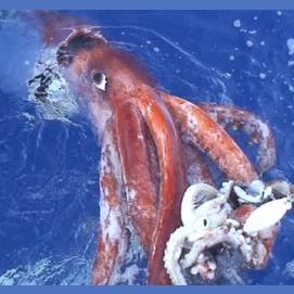 Giant Squids