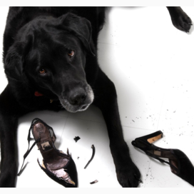 Chewed up shoes