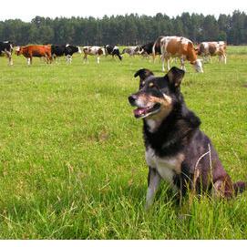 Ranch/Farm