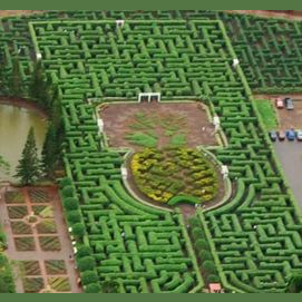 Dole Plantation Labyrinth
