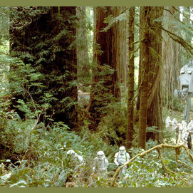 The Forest Moon of Endor