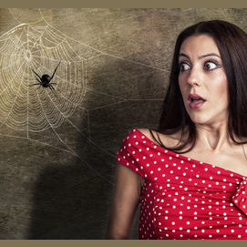Fear of Spiders or Animals