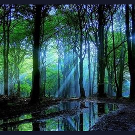 No city, im a wild living person, i want to live in a forest!