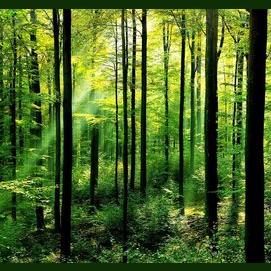 В лес/Какое-нибудь дикое место