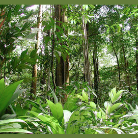 Amazon rainforest wilderness