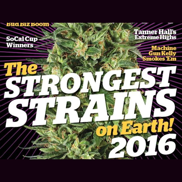 Have a career reviewing pot strains from anywhere for HT?
