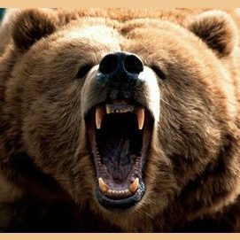 Yeah, I'm definitely a Momma-Bear.