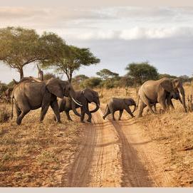 Safaris.