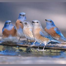birds chirping.
