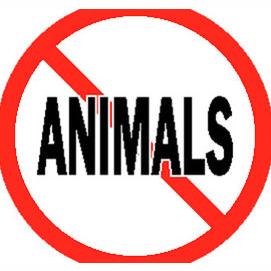 Não gosto de animais.