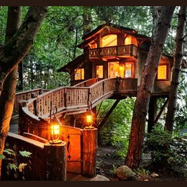 A tree house deep in the forest