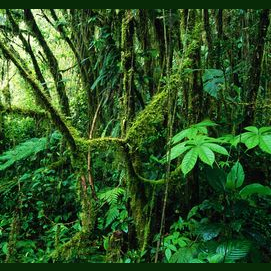 Exotic Rainforest in Costa Rica