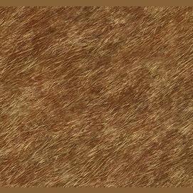 Short, clean brown fur