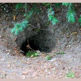 Peaceful burrow
