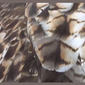Streamlined, sleek feathers