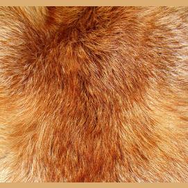 Vibrant, fiery fur