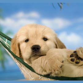 In a hammock in the sun