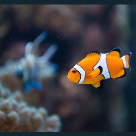 A fish!